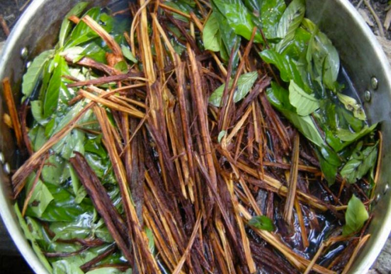 Ayahuasca - Foto: The Costa Rica News